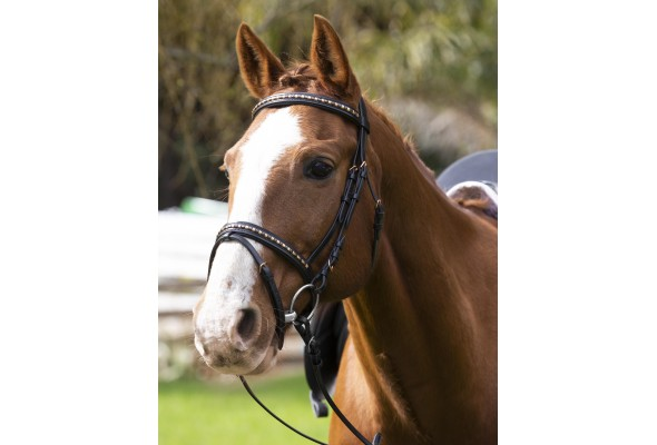 Enzo Amy Rosegold Clincher Bridle
