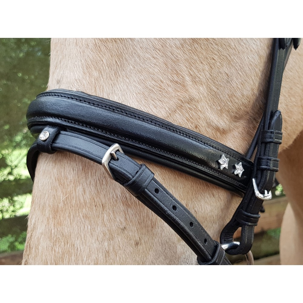 Enzo Bands: Enzo Bridle W/Star