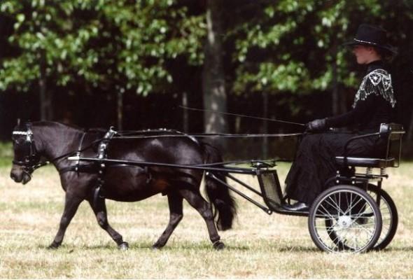 Easy Entry Horse Cart Mini