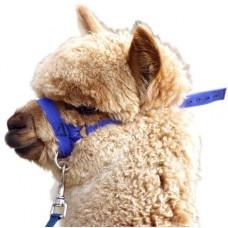 Prima Alpaca Web Halter w/Lead