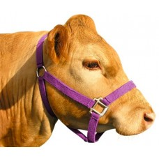Prima Cattle Web Barn Halter